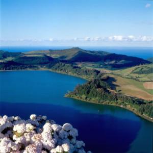 Hortensias dos Açores